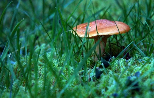 mushroom magic by adobedon