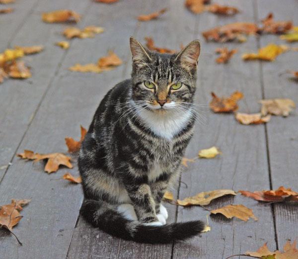 autumn meditation by fotoboy