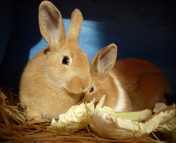 Rabbits by KTM112