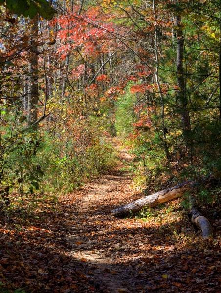 Woodland Path by jbsaladino