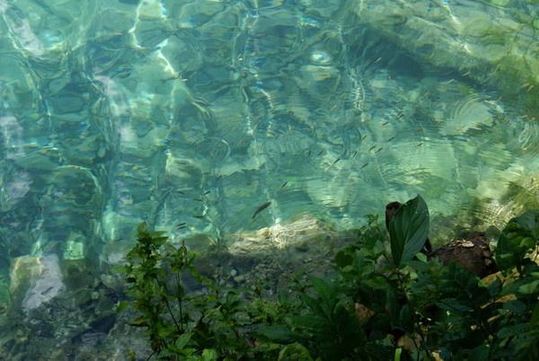 Little fish grow into big fish by rayjac