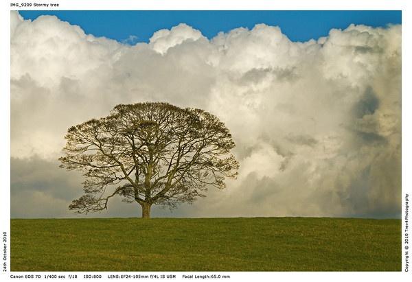 Lone tree by trev4