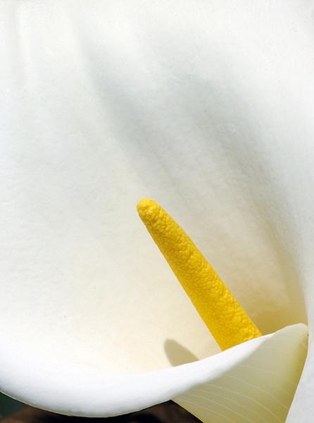 Yellow on White by bigredtim
