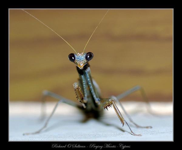 I got my eye on you mate!!! by Richard_OSullivan