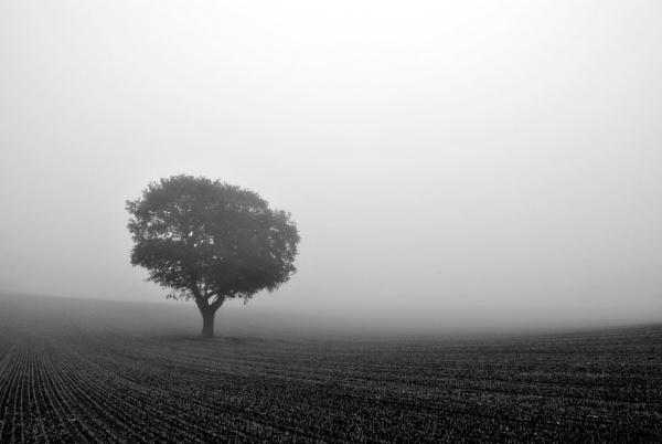 Cool Morning In the fog by soulsharer