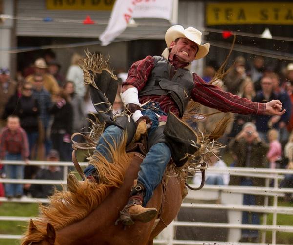 Rodeo - Saddlebronc Rider by steve_evans