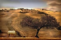 Rural Spain View