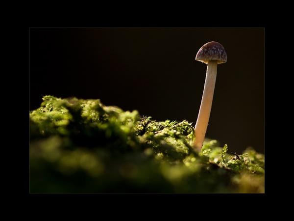 Fungi by bigheart.