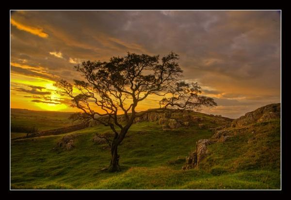 Evening Light by danbrann