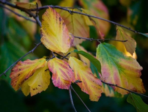 Autumnal Light by Artois