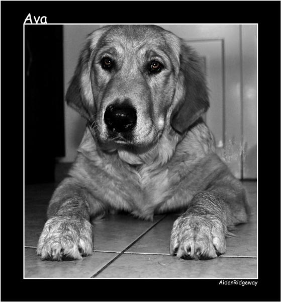 Ava by Ridgeway