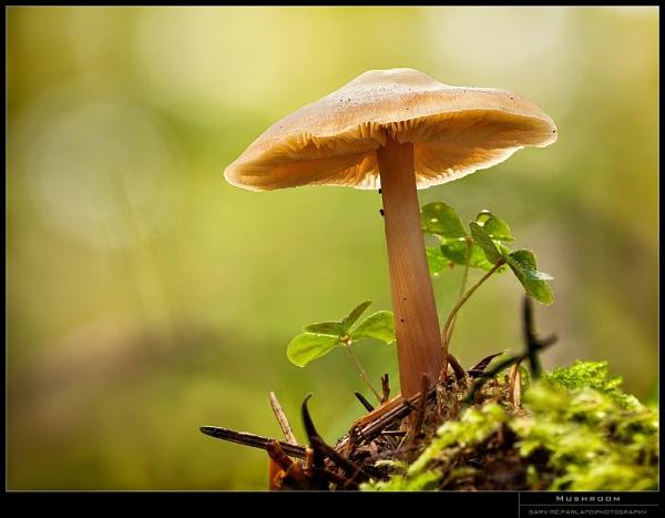 Mushroom by garymcparland