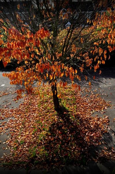 Autumn by Robert_Jones