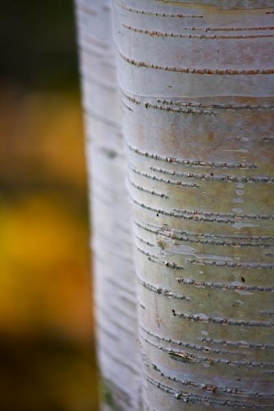 Autumn Echoes by alansdottir