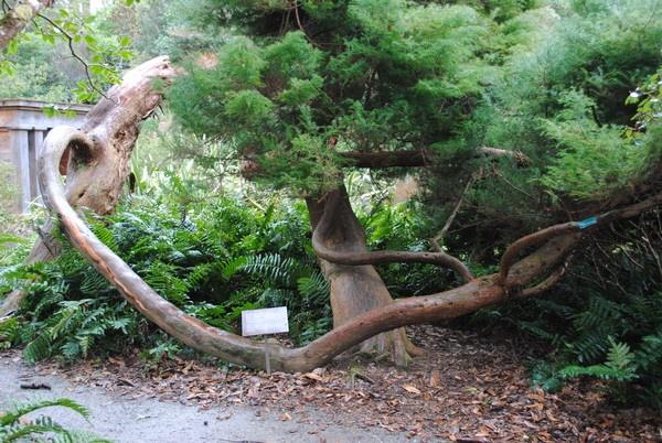 Twisted tree by diamondgeaser