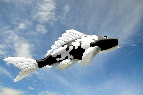 The Koi Kite by Viper13