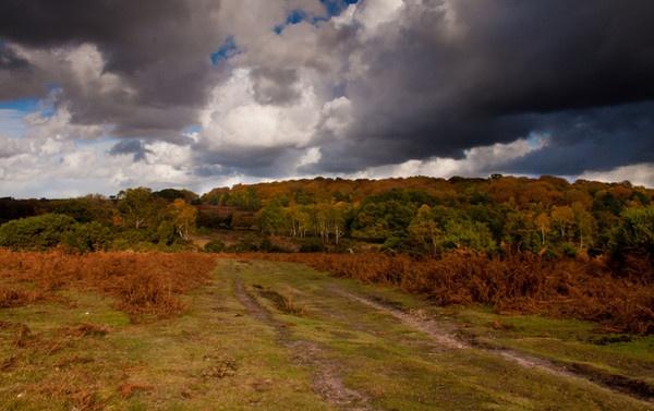 Autumnal Colours by mlanda