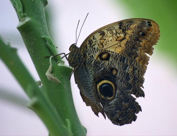Butterfly by TrevW