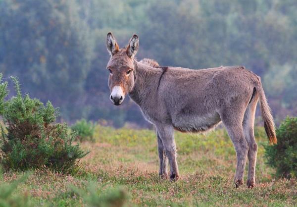 Donkey by LukeParkinson