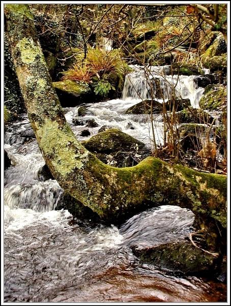 Lamorna Stream.. by rpba18205