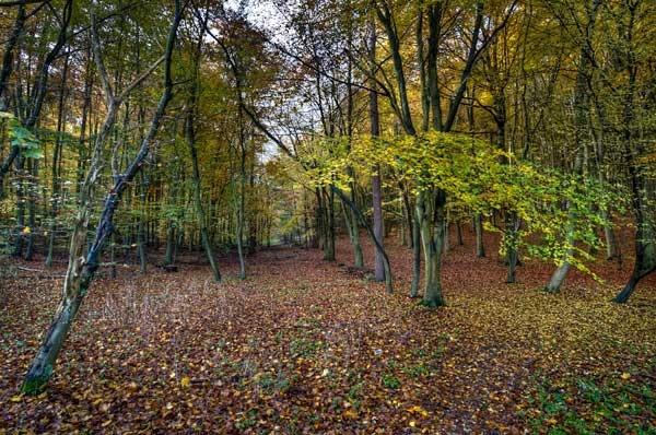 Autumn avenue by garyeason