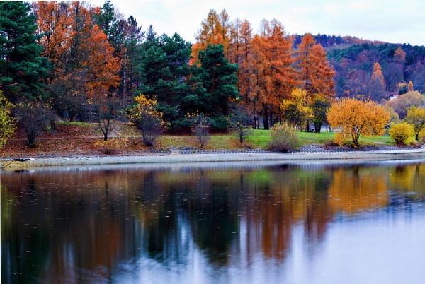 Tree Color by Gukmedia