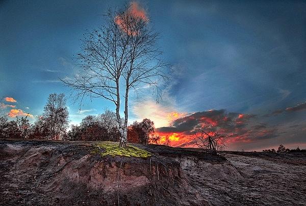 Tree by grezmel