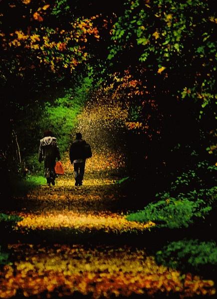 Autumn Walk by am52