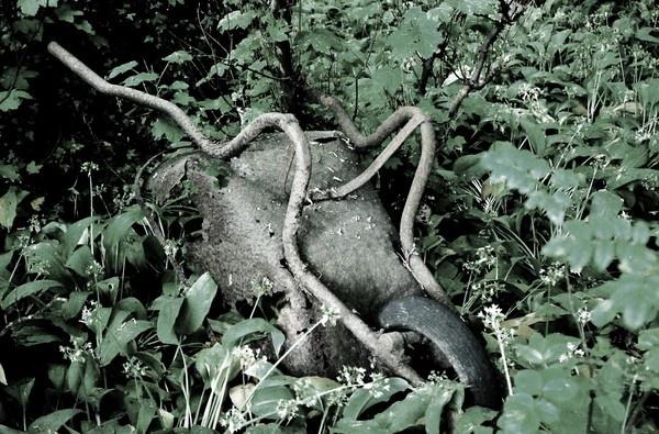 Rusty wheelbarrow by mrfmilo