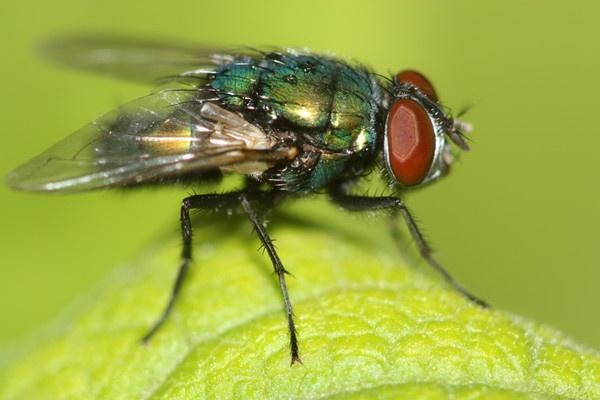 fly by glennmeeds