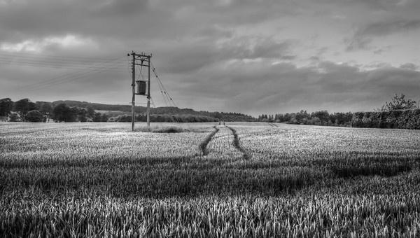 Field by cmorton