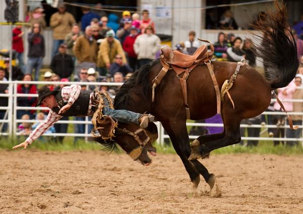 Rodeo - VII by steve_evans