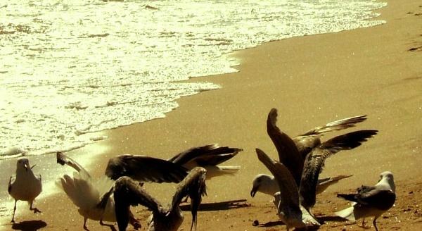Beach combing by Chinga