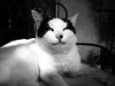 Lethal Feline