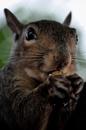 Charming Squirrel