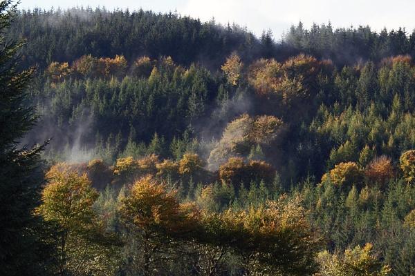 Autumn Woodland by jon gopsill