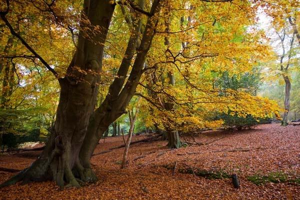 Epping Autumn by StuartAt