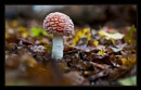 Fly agaric by gregl