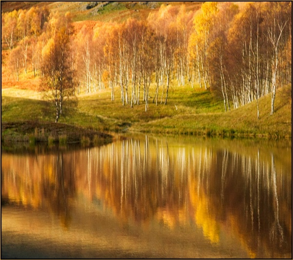 Silver & Gold by MalcolmM