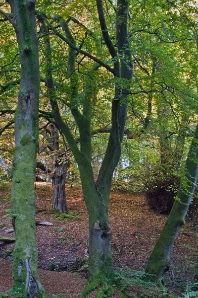 Trees by iainglennie