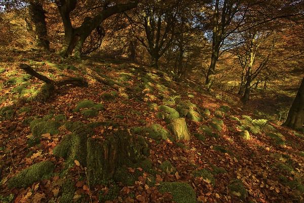 Dappled Autumn Light by Alan_Coles