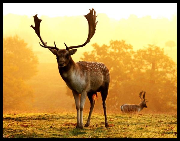 A Golden Buck by sevenmalt