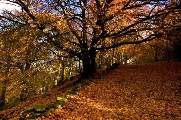 Autumn by 11thearlofmar