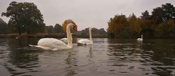 Clumber Park Autumn 2 by iancatch