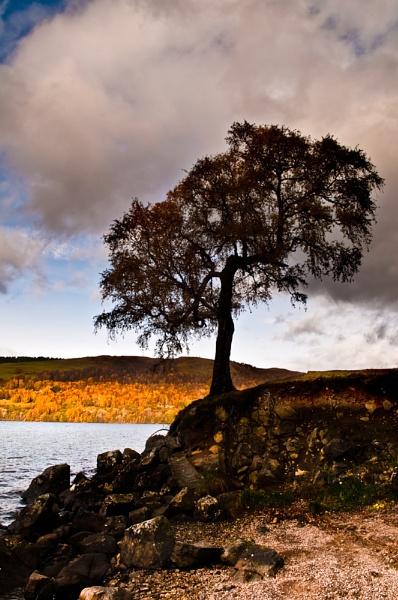 Tummel Tree by Scutter