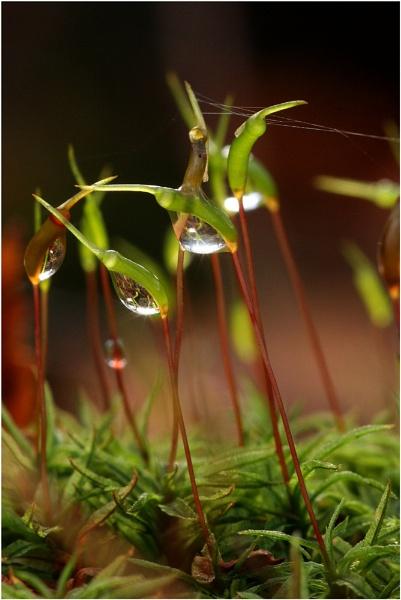 Dew Dew by steve_eb