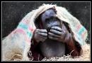 You Cheeky Monkey