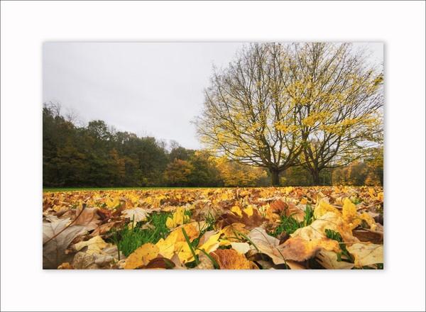 autumn by Sloman