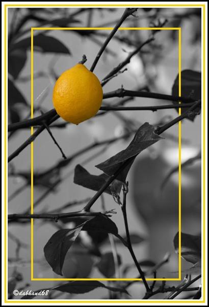 lone lemon by dabhandphotographics
