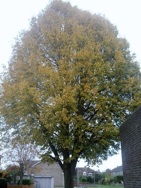 Tree by kforeman